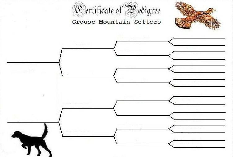 Blank Pedigree Form For Dogs Blank Dog Pedigree Chart